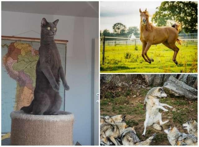 Победители Comedy Pet Photography Awards 2017