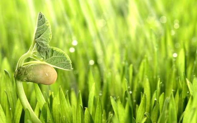Как определить съедобное растение или нет