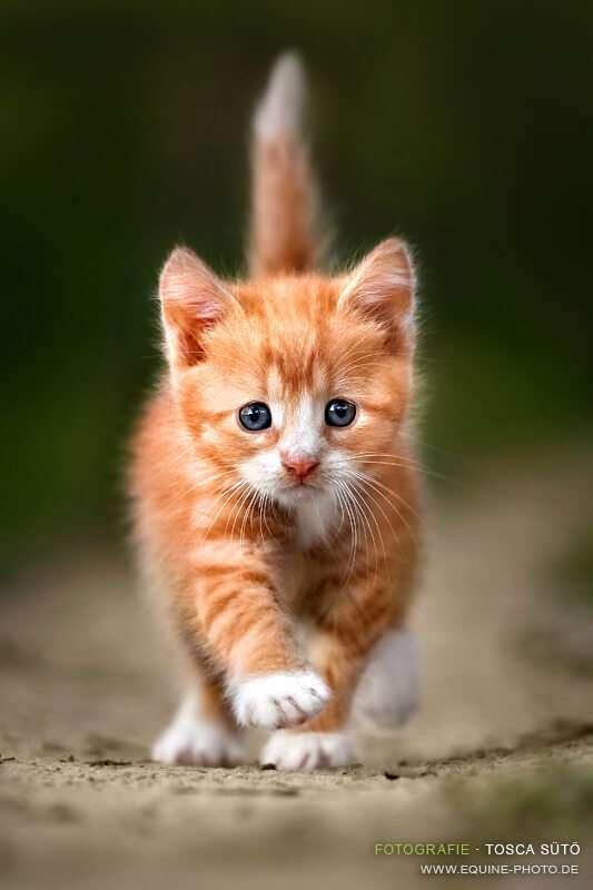 Коты-знаменитости