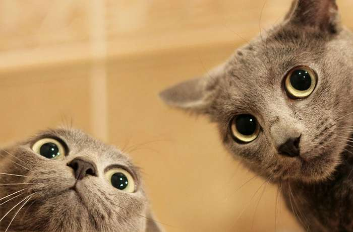 В Нижнем Новгороде есть вакансия для кота с оплатой в 20 000 рублей