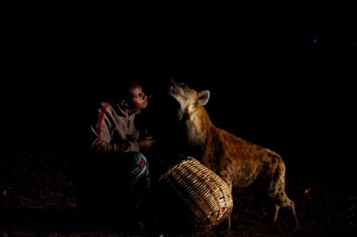 Как кормят гиен в Эфиопии