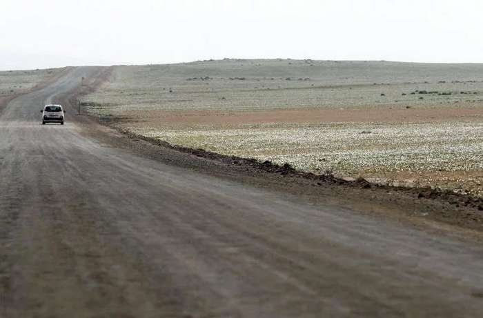 В самом засушливом месте на Земле распустились цветы