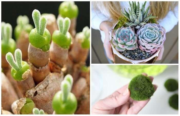 Как в сказке: 10 волшебных комнатных растений, о которых вы наверняка не знали