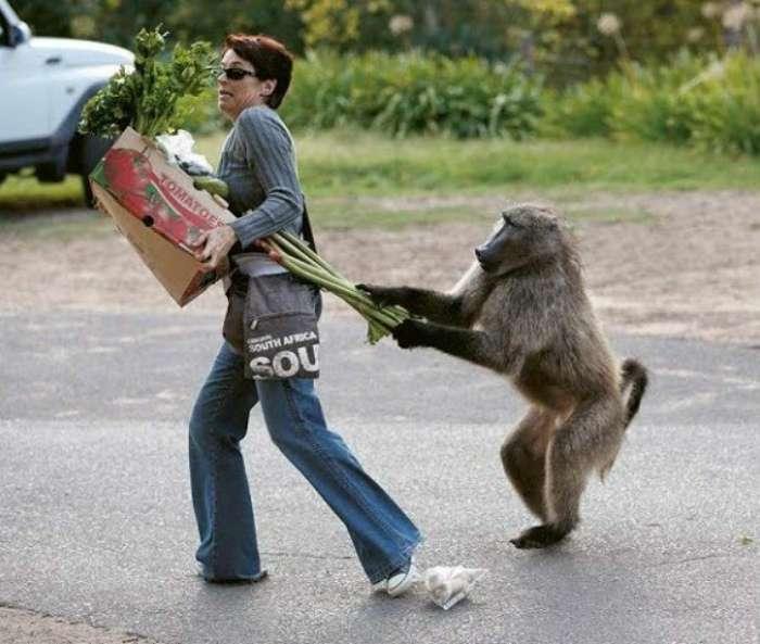 19 забавных моментов, когда люди стали случайными жертвами животных и птиц