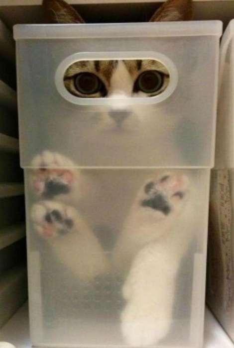 19 забавных котов, которые были обнаружены в самых неожиданных местах
