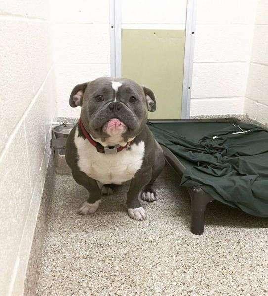 Собака из приюта обрела хозяина (6 фото)
