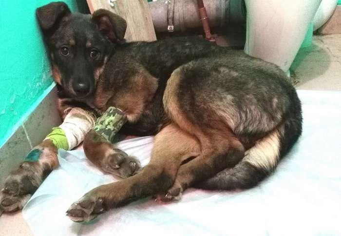2 истории о погубленных щенках, которых вырвали из лап смерти (9 фото)