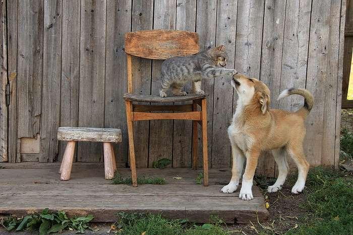 Деревенская идиллия в фотографиях Сергея Красноперова (39 фото)