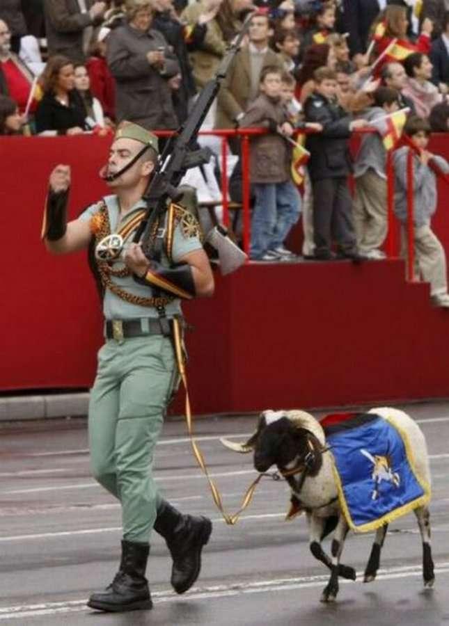 Приколы военных со всего мира (39 фото)