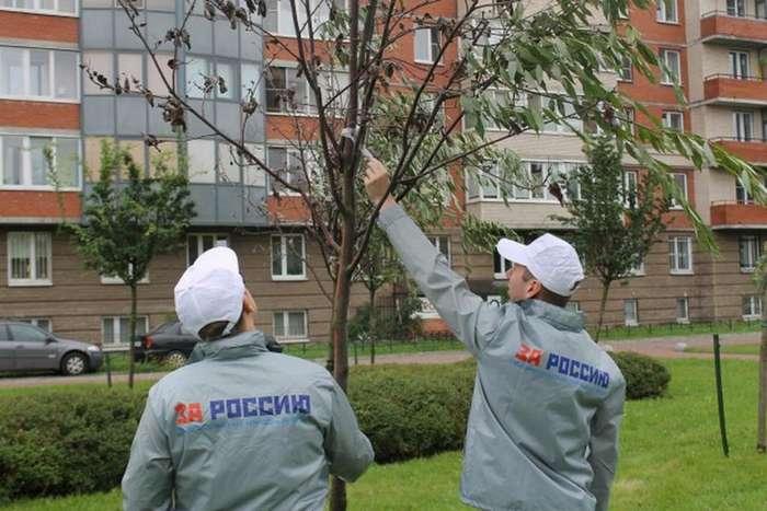 Коммунальщики из Санкт-Петербурга использовали скотч и мертвые деревья для победы в конкурсе &171;Уютный сад&187; (3 фото)