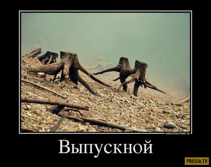 Демотиваторы (42 фото)