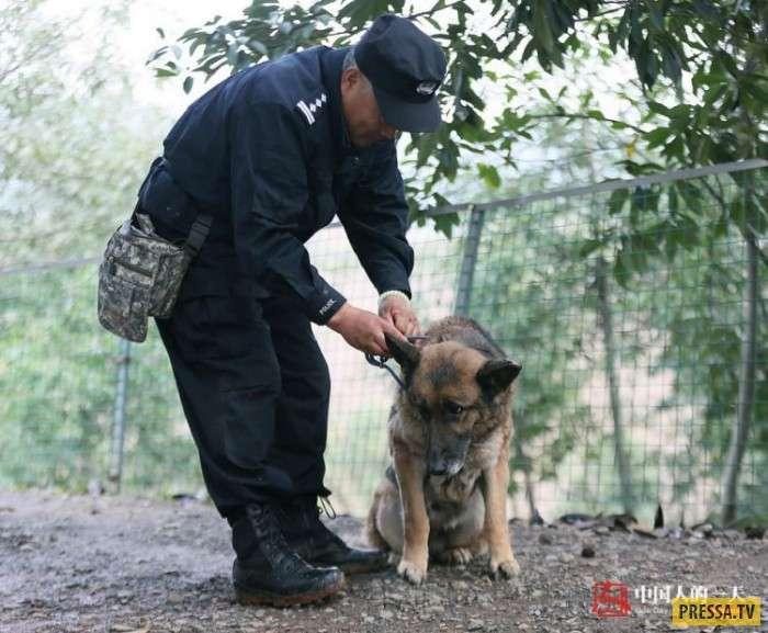 Частный дом престарелых для служебных собак в Китае (6 фото)