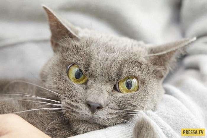 Кот с самым злым выражением мордочки (8 фото)