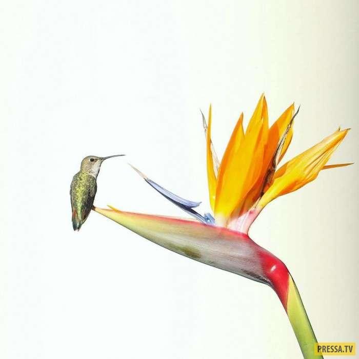 Лучшие фотографии дикой природы от Роберта Ирвина (15 фото)