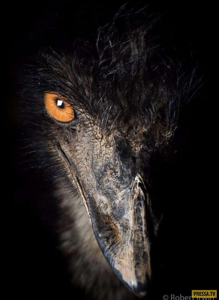 Магия дикой природы в фотографиях 13-летнего Роберта Ирвина (50 фото)