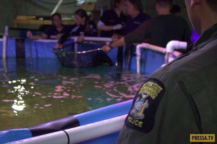 В Нью-Йорке полицейские обнаружили в подвале бассейн с акулами (4 фото)