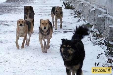 Как ты к собакам, так и они к тебе...