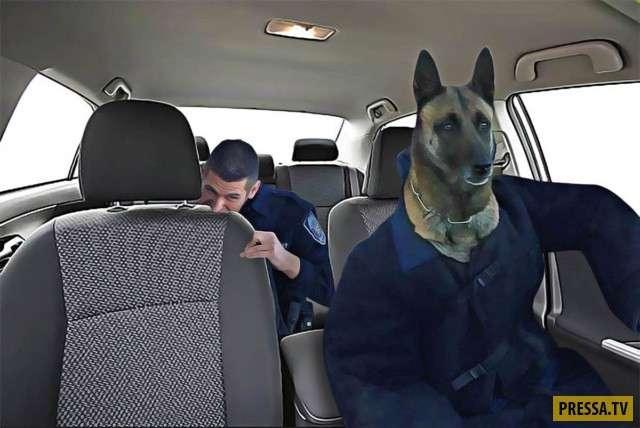 Битва фотожаб – полицейский кусающий собаку (11 фото)