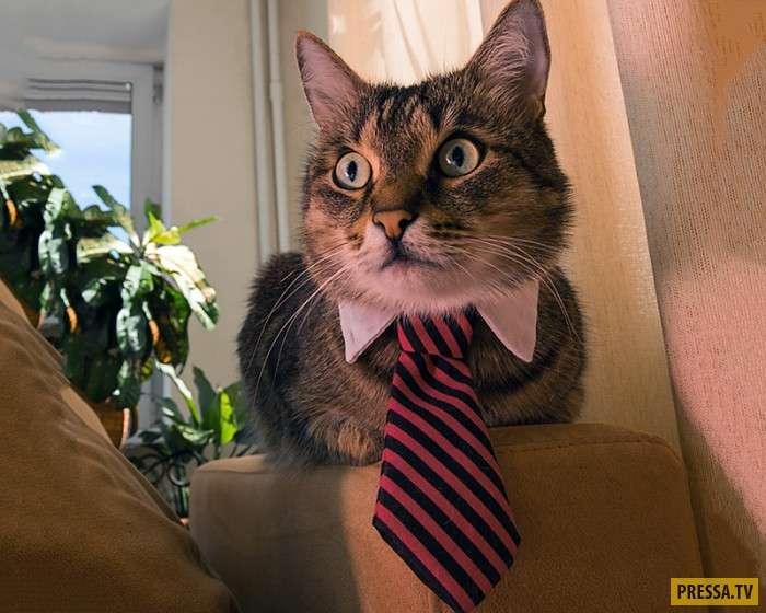 Нижегородская вакансия для кота с зарплатой 20 тысяч рублей (11 фото)