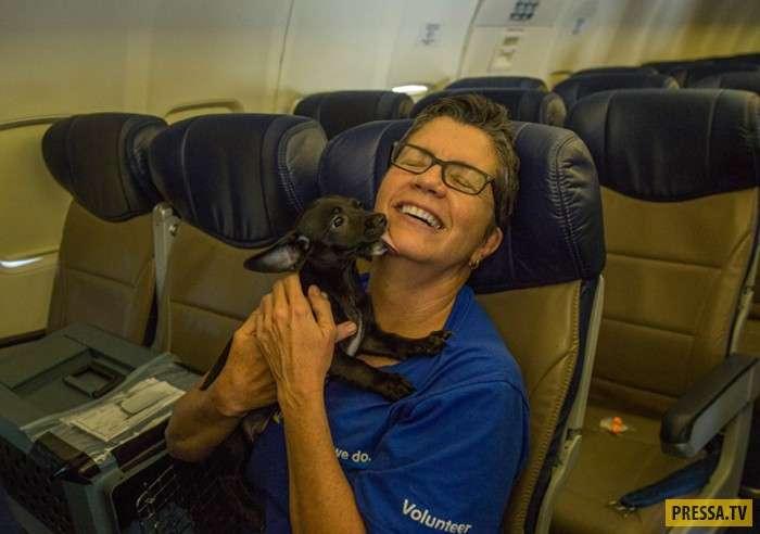 """Спасение животных, пострадавших от урагана """"Харви"""" (10 фото)"""