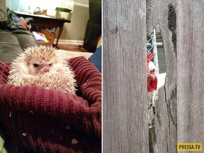 Ну очень сердитые животные (33 фото)
