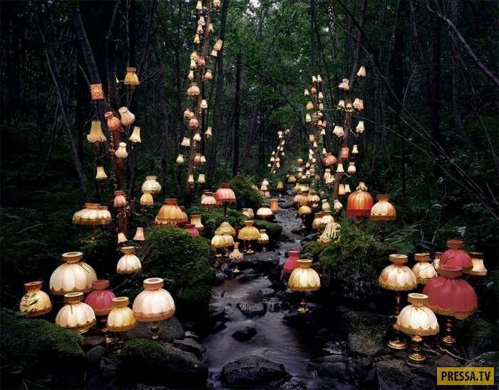 Сюрреалистичный мир света и деревьев (13 фото)
