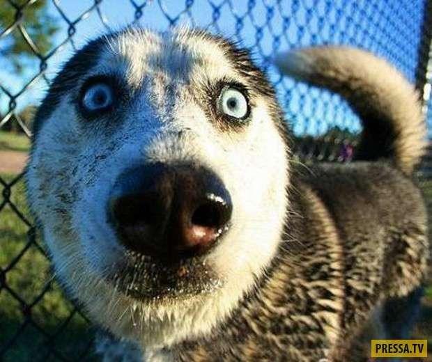 Собачий ужас и кошмар