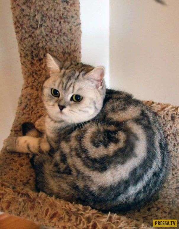 Самый необычный окрас котов (16 фото)