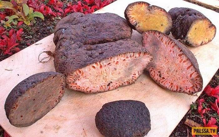 Смертельно-опасный деликатес с трупным ядом - копальхен (6 фото)