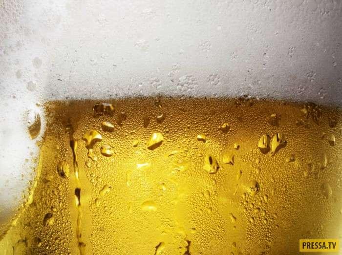 И все-таки, пиво пить - полезно! (11 фото)