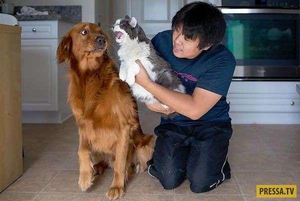 Кошки и собаки, лучшие враги (20 фото)