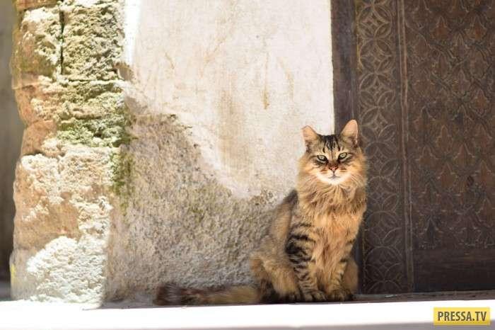 Город котов – Эс-Сувейры (12 фото)