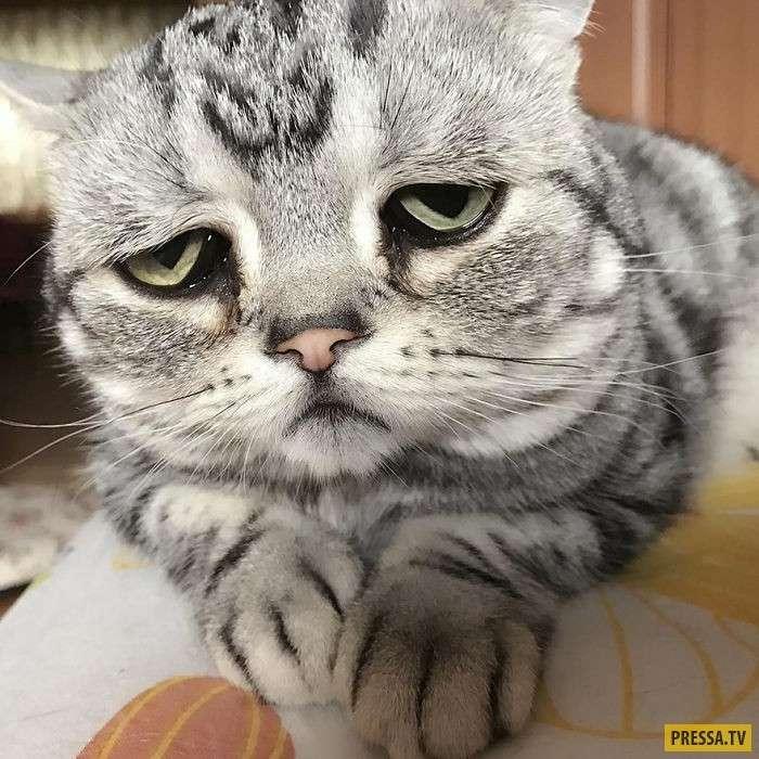 Вся скорбь этого мира в мордочке кота Луху! (20 фото)