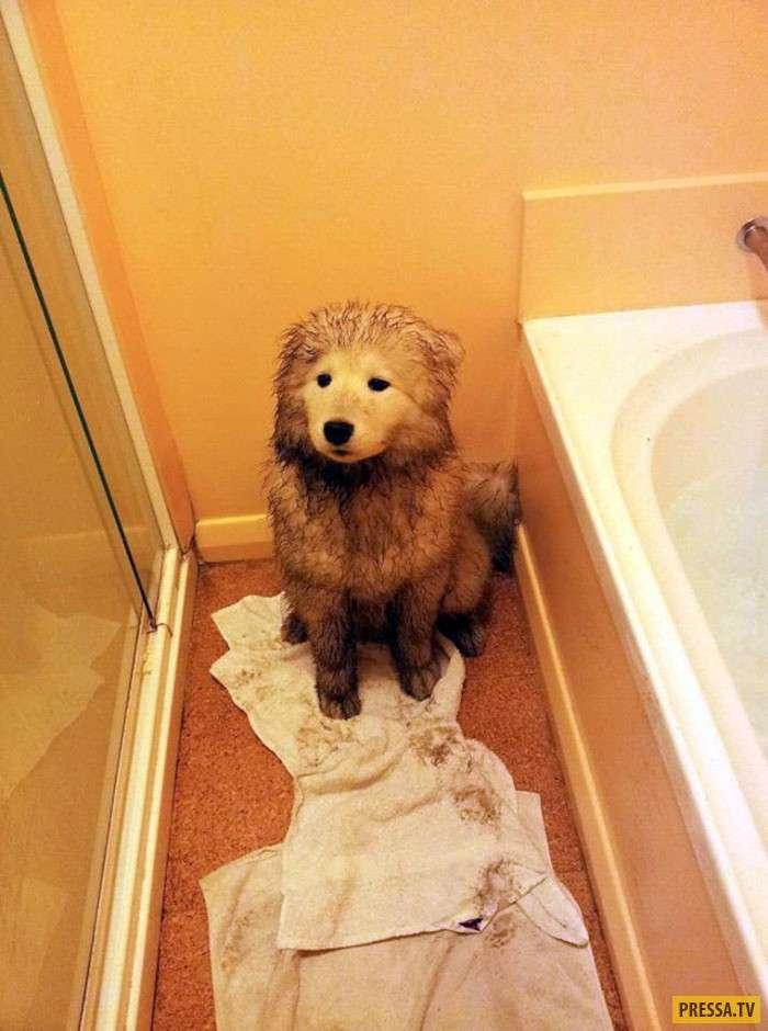 После этих фотографий, Вам захочется помыть этих собак (14 фото)