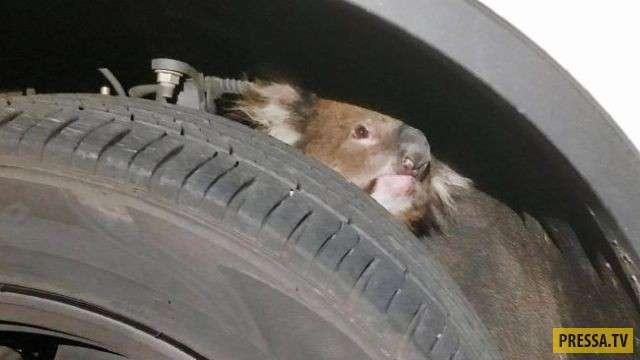 Странная находка в подвеске автомобиля (4 фото)