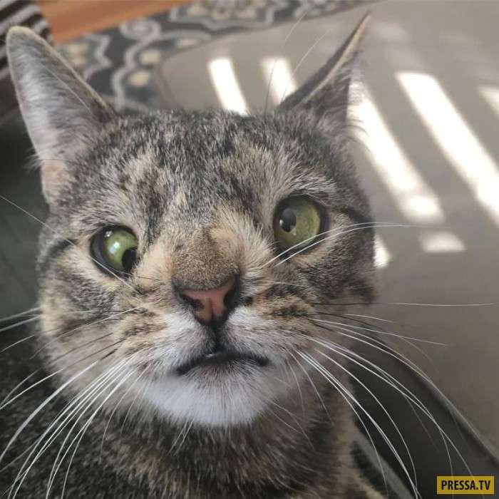 Кошка Майя с дополнительной хромосомой (19 фото)