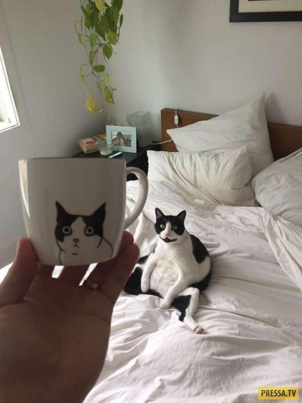 Забавные котики (30 фото)