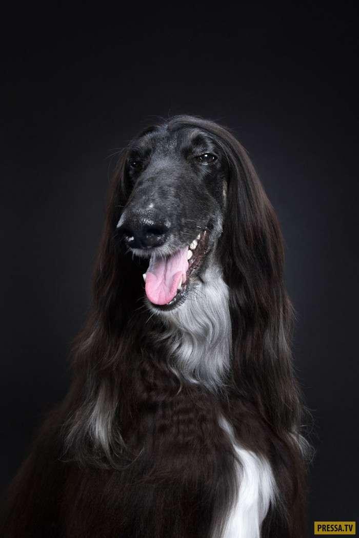 Серия фотографий, которая доказывает, что каждая собака имеет свой характер (12 фото)