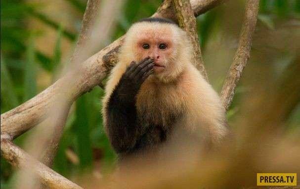 Вот тебе и глупые приматы