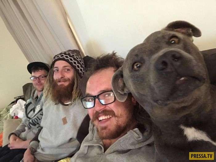 Умилительные и забавные собаки (36 фото)