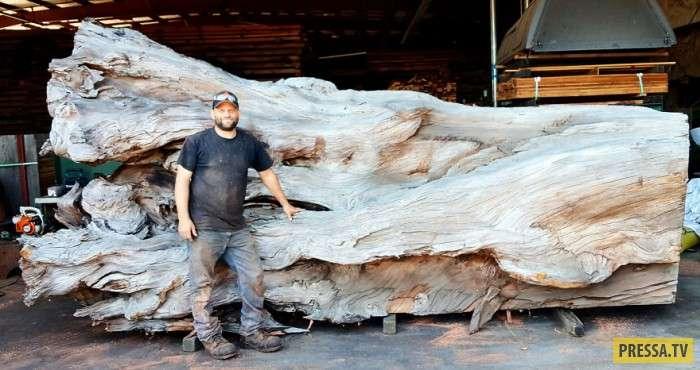 Мастер по дереву сделал из бревна гигантского осьминога (8 фото)