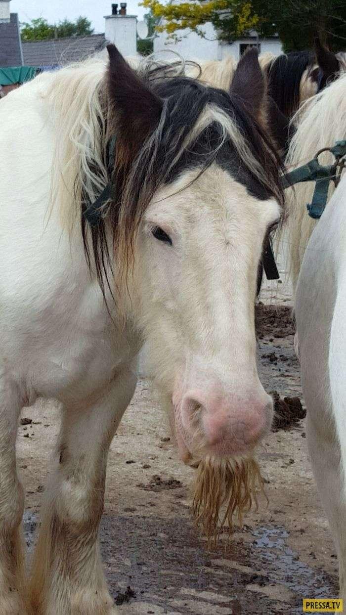 Усатые лошади - это что-то удивительное! (27 фото)