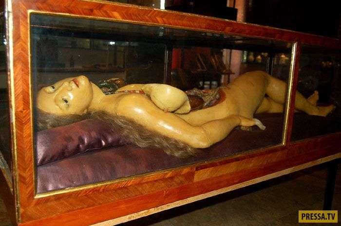 Жуть, да и только! Анатомические Венеры XVIII века (14 фото)