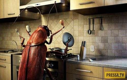 Сюрреализм какой-то! Теща и тараканы