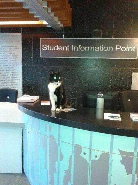 24 доказательства того, что кот всегда найдет себе место
