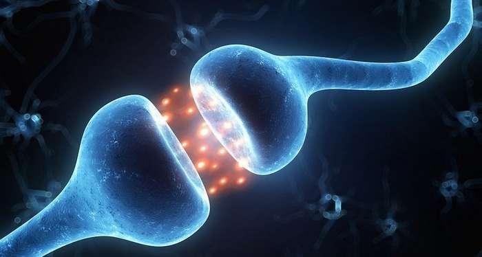 Открыт новый механизм по контролю человеческой памяти