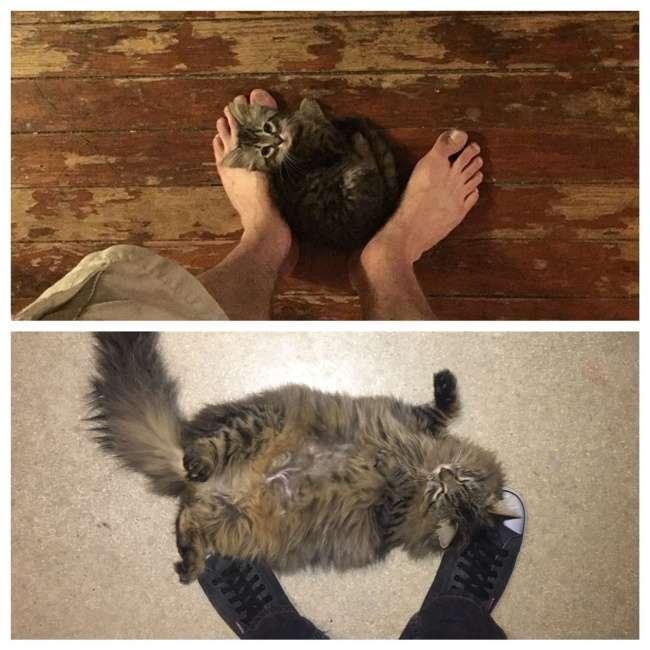 15неоспоримых доказательств того, что коты растут нуочень быстро