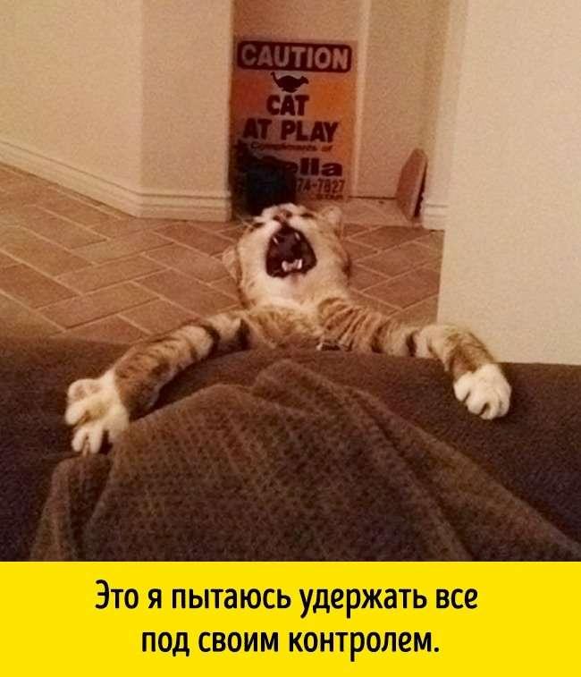 15доказательств того, что именно кот— царь зверей