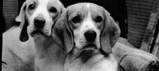 Неизвестная история: Британский холокост животных-11 фото-