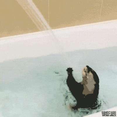 25 умилительных домашних животных, которые обожают принимать ванну-9 фото + 16 гиф-